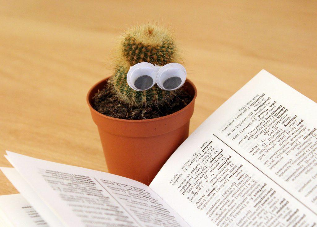 Kaktus z doklejonymi oczami stoi obok otwartej książki. Czyta.