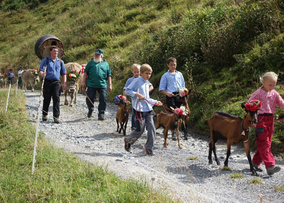 Szwajcaria. Ludzie idący po ścieżce górskiej z kozami i krowami. Po szwajcarsku.